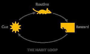 اهمیت عادت